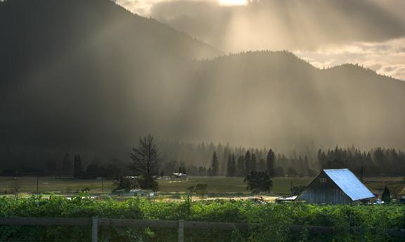 vineyards-tanglevine.jpg