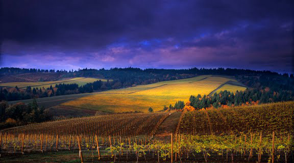 vineyards-wood-manses.jpg